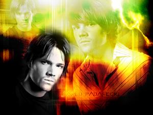 Jared 5